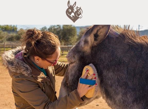Donkey Sanctuaries